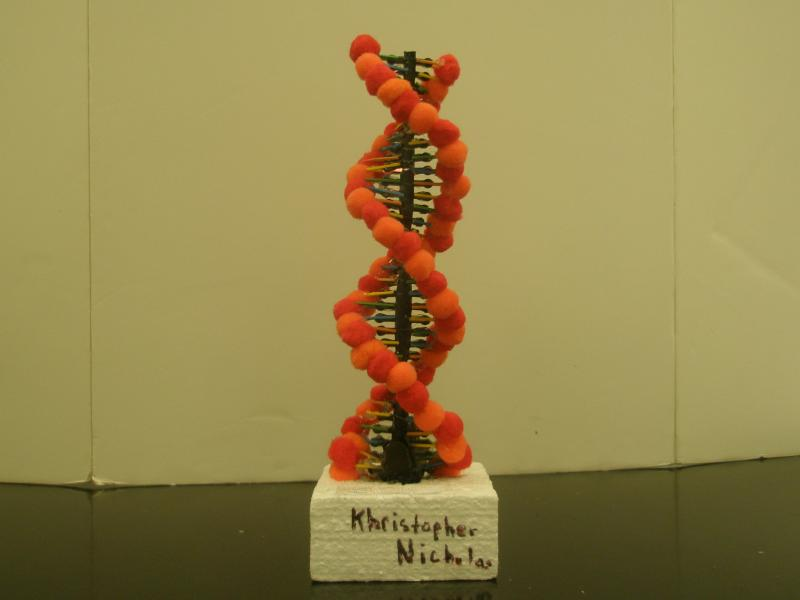 3d Dna Molecule Project Styrafoam Dna Molecule Project