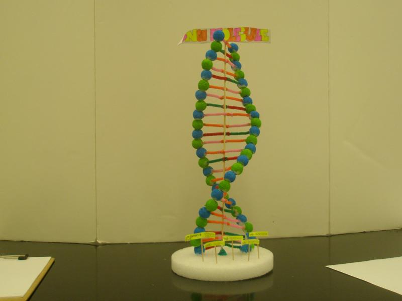 dna models projects Biology lesson plans, labs,  ngss life science has environmental science projects, human body science projects, cell biology projects, dna evolution projects,.