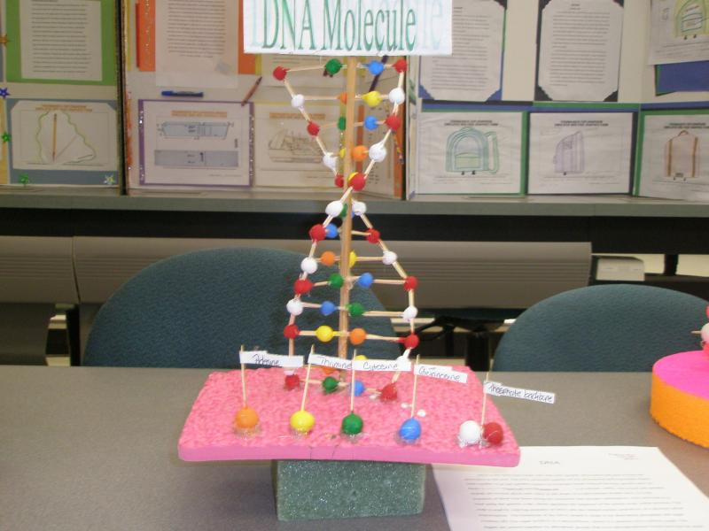 dna molecule project A 3-d dna model does not have to be difficult to build (image: simon999/flickrcom) a 3-d model of a strand of dna is an appropriate project for an elementary science fair that will even appeal to students more interested in the arts than in science while this may seem like a difficult project to.